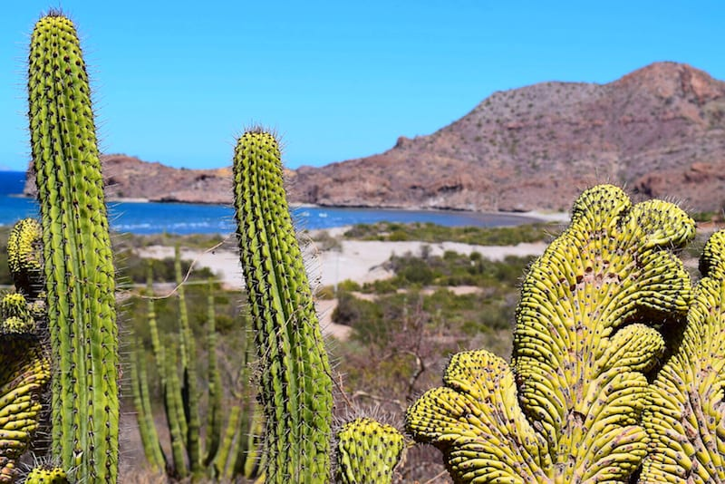DIY Baja California Road Trip: 64 Tips to Create Your Own Baja Adventure