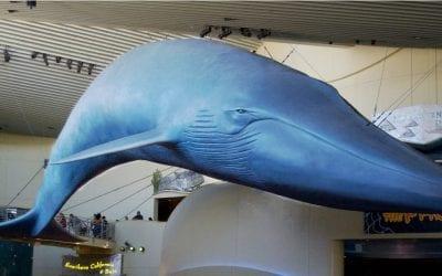Exploring the Aquarium of the Pacific