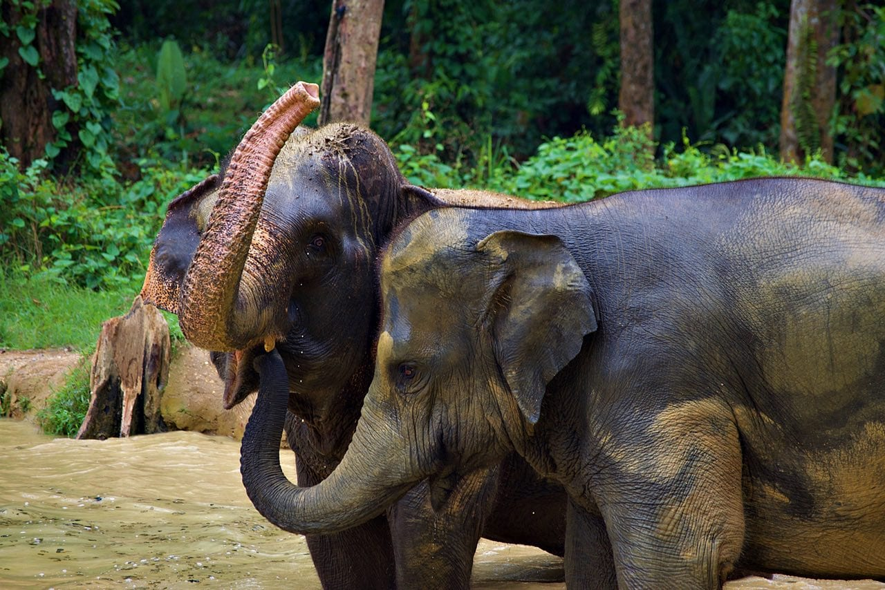 Elephant Love Thailand