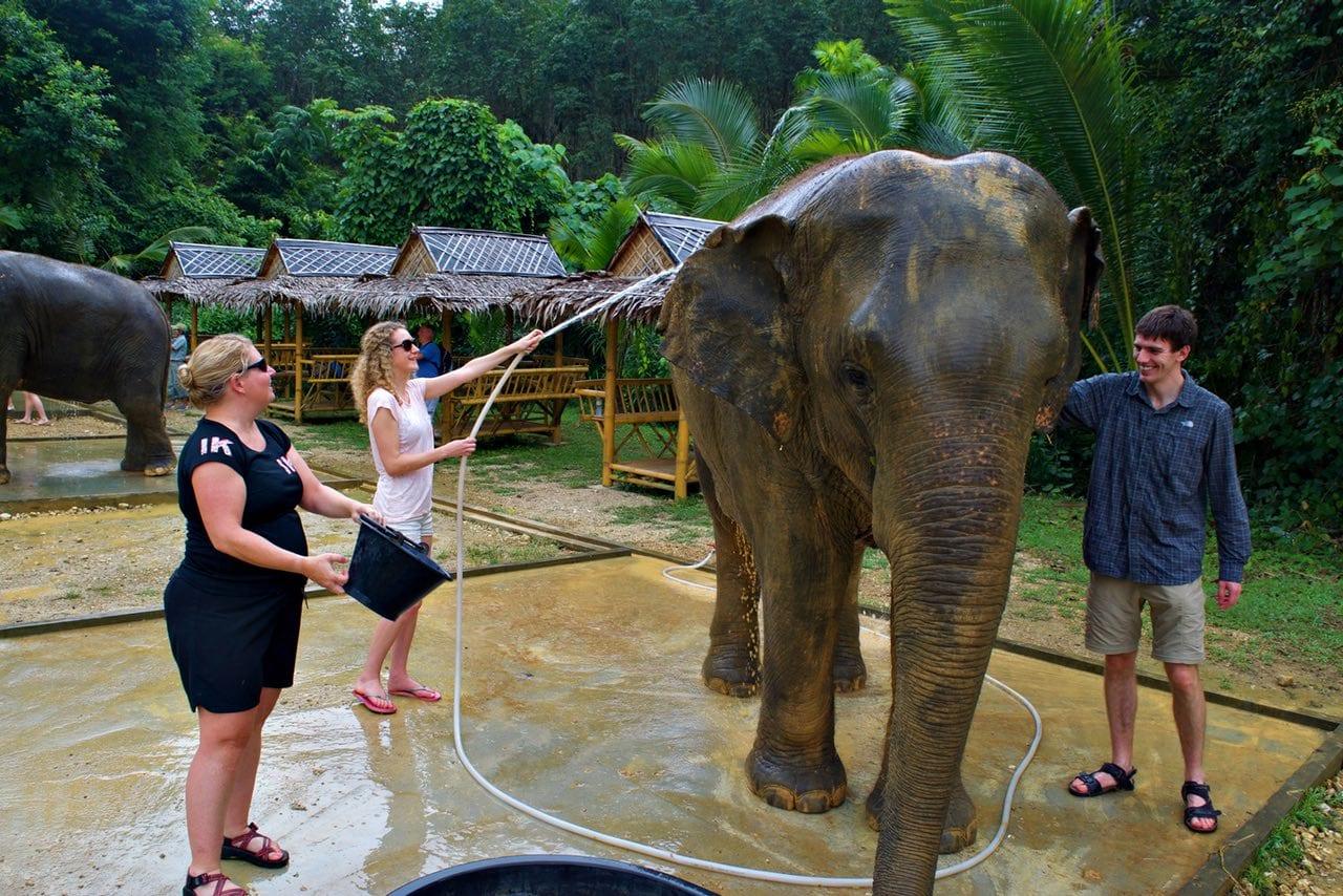 Team elephant washing