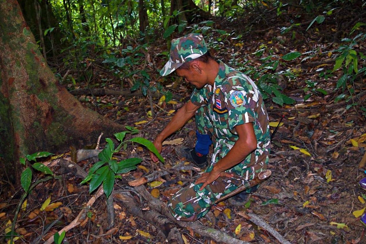 Jungle guides