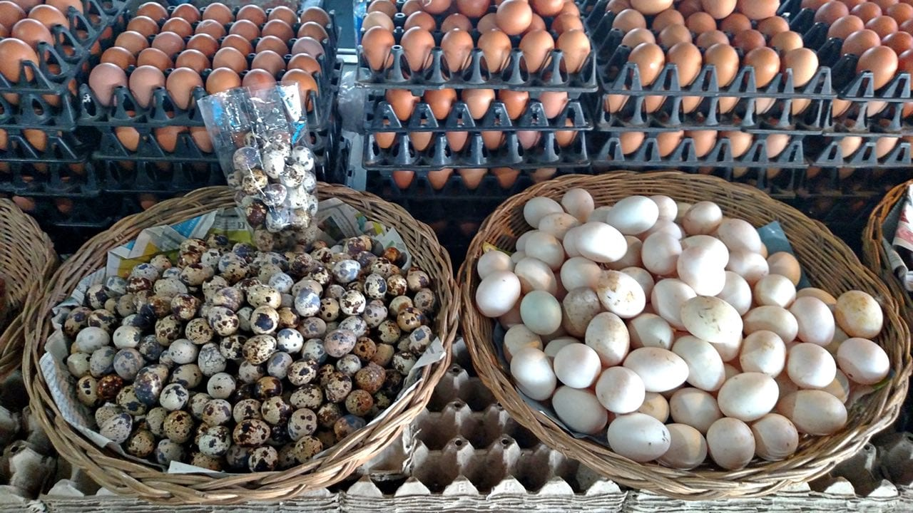 All kinds of eggs