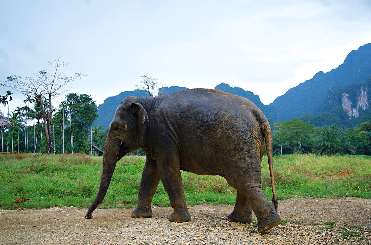 Our cleaner elephant