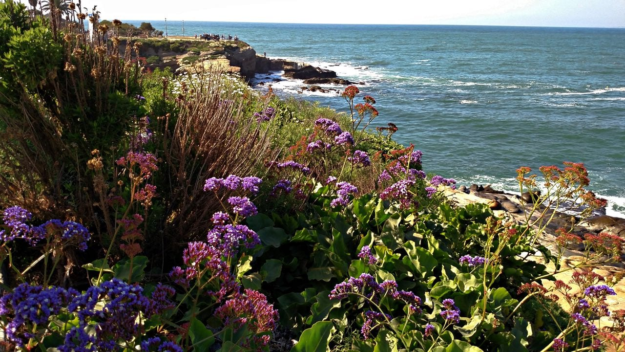 Spring flowers looking towards La Jolla Cove