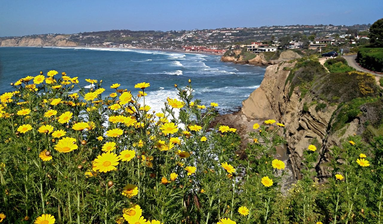 The bloom looking north to La Jolla Cove