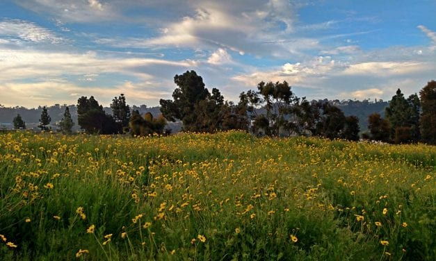 Photographic Tour of California's Wildflower Bloom