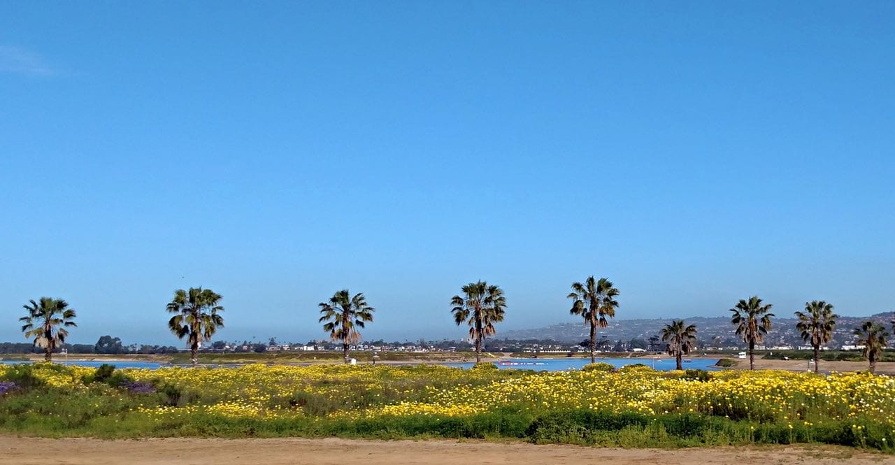 Mission Bay in bloom as seen from Old SeaWorld Drive