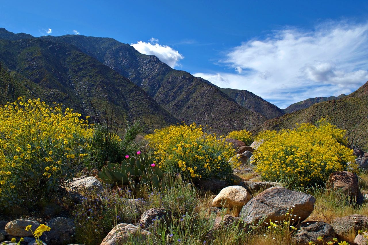 Wildflowers on Borrego Springs hike