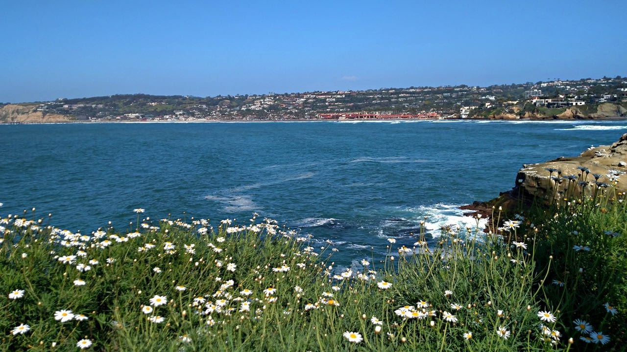 Spring bloom lookout out from La Jolla Coast Walk