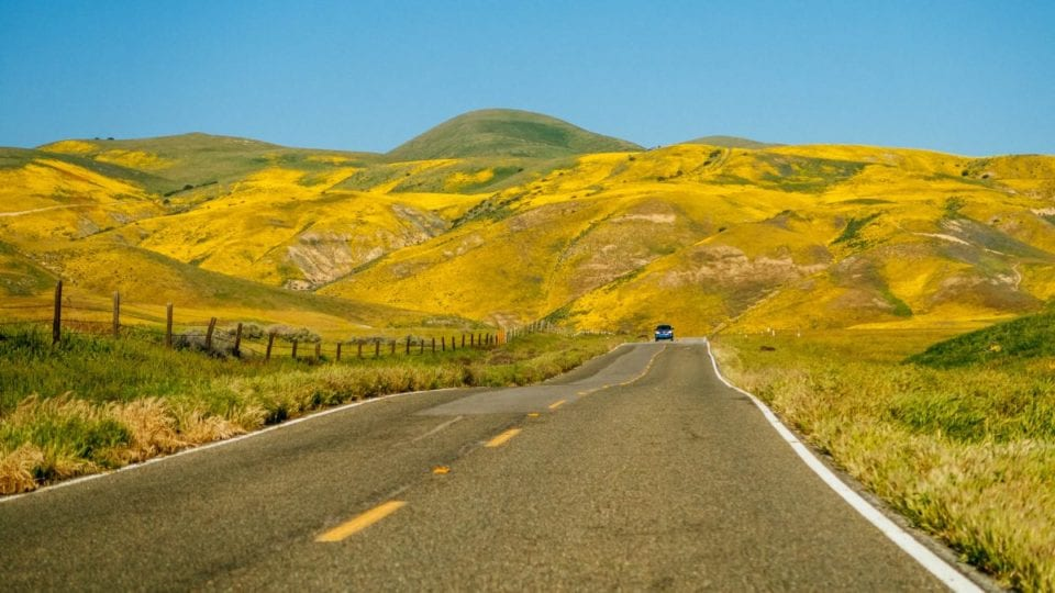 carrizo-plain-wildflower-superbloom via Shimona Carvalho from @Sidecar Photo
