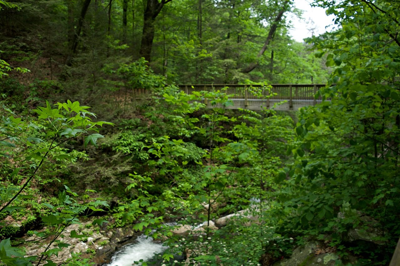 Daniels Creek Bridge in Cloudland Canyon State Park