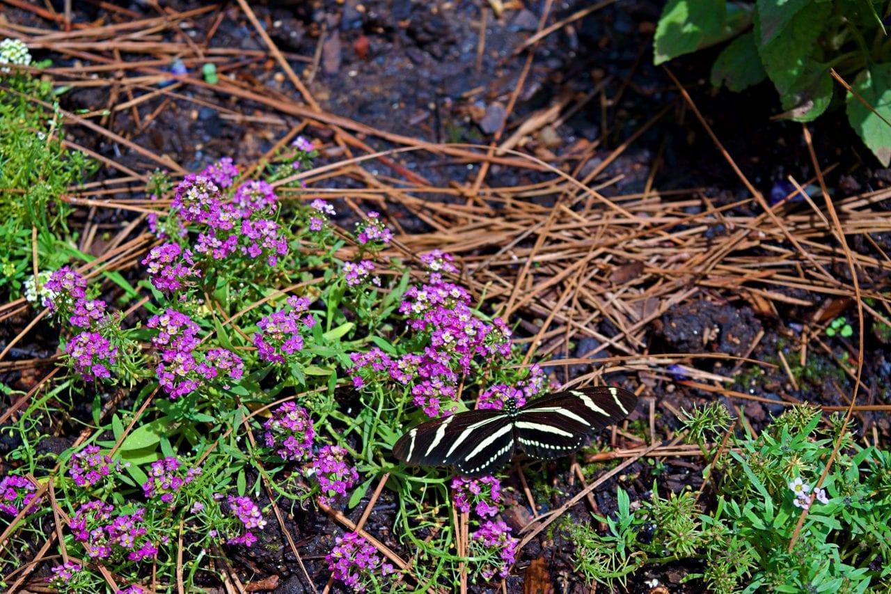 Indoor butterfly garden in Huntsville
