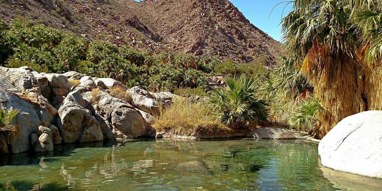 Guadalupe Canyon Hot Springs – The Most Unique Camping in Baja