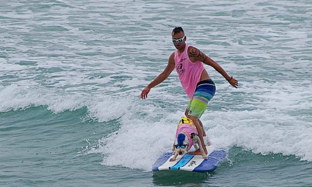 Tails Up, Surfs up – Surf Dogs Hanging 20