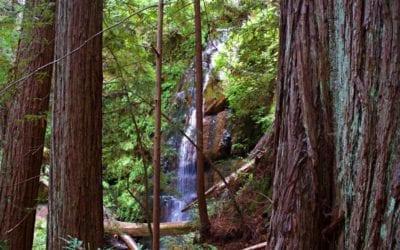 Why Hike Berry Creek Falls Loop at Big Basin Redwoods State Park