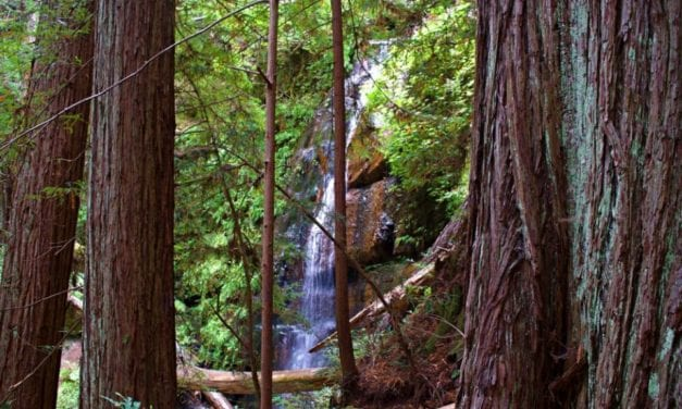 Berry Creek Falls Loop at Big Basin Redwoods State Park- A Hiking Guide