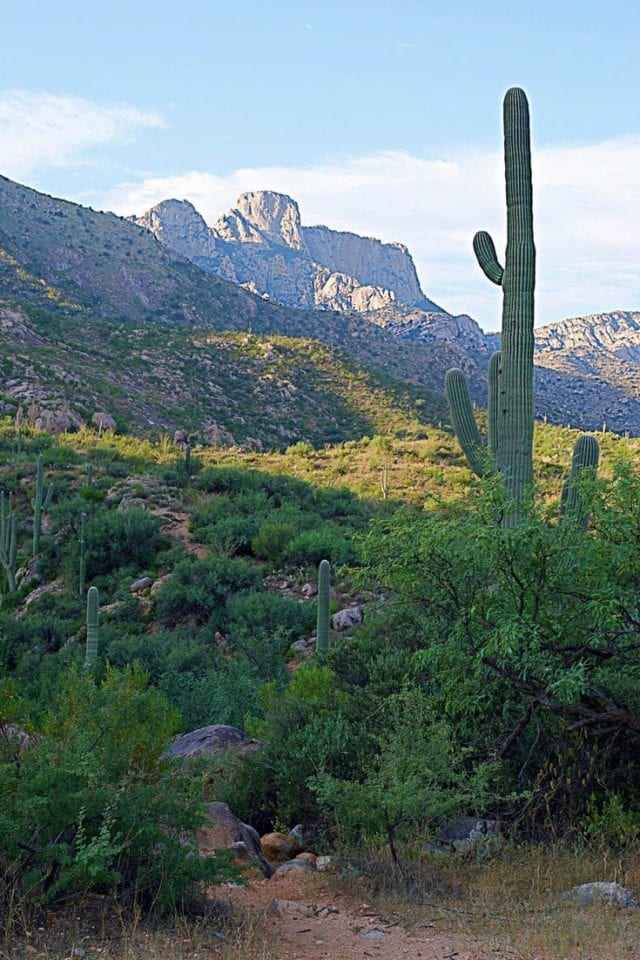 Romero Pools: Tucson's Other Hiking Trail With Water
