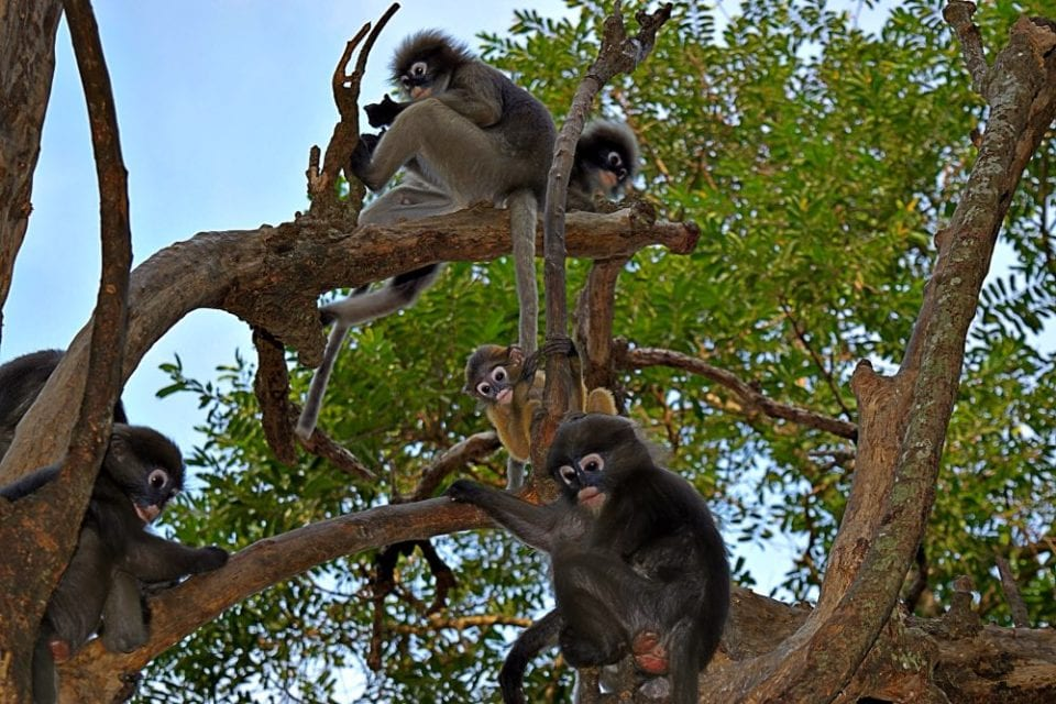 Baby monkeys at the base