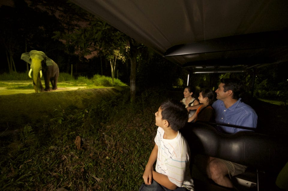 Night Safari in Singapore