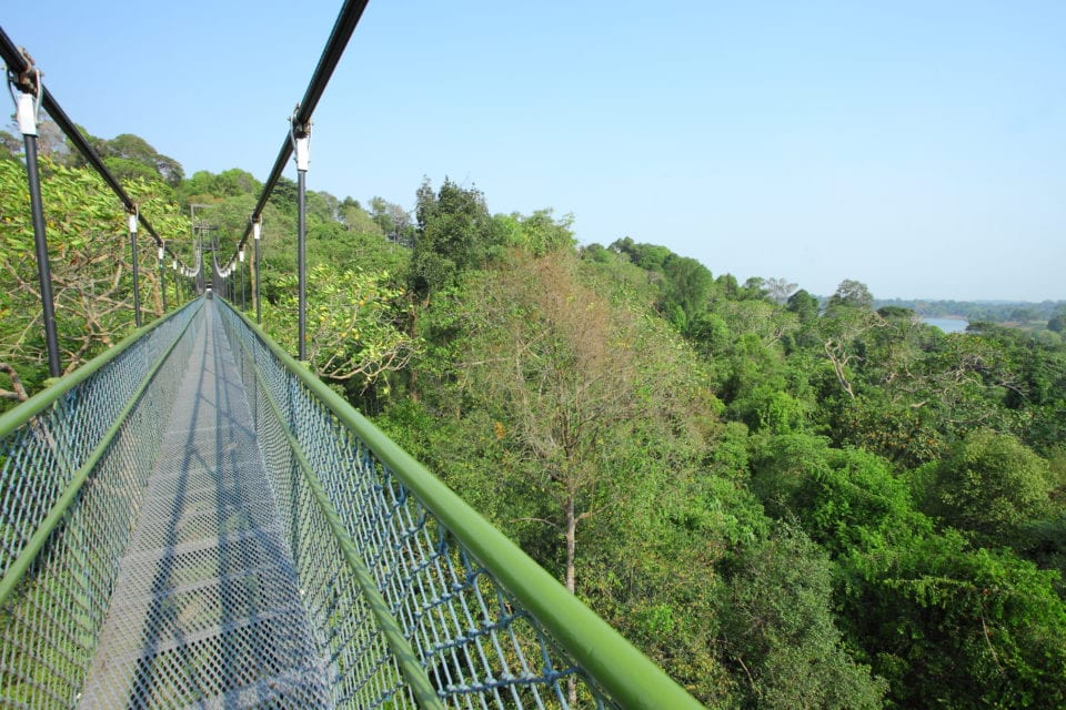 Tree Top Walk in Singapore