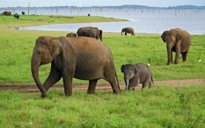 What Made Sri Lanka Our Best Trip Yet: Adventure, Luxury, and Baby Elephants