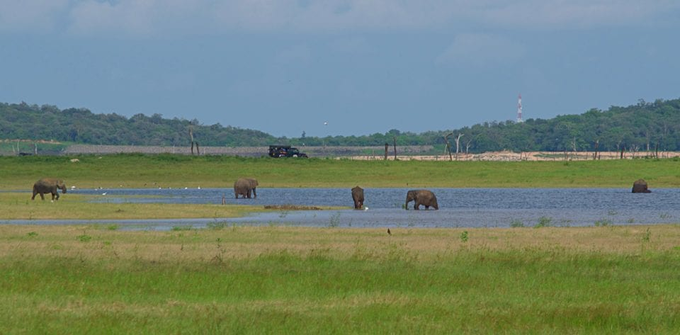 Elephants in the lake Kaudulla National Park