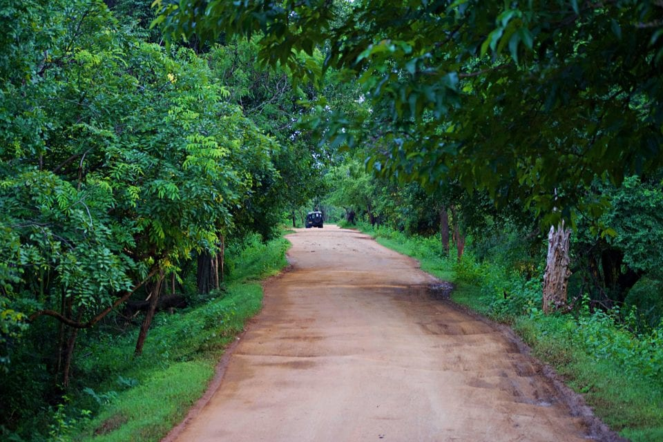 Jungle road through Kaudulla National Park