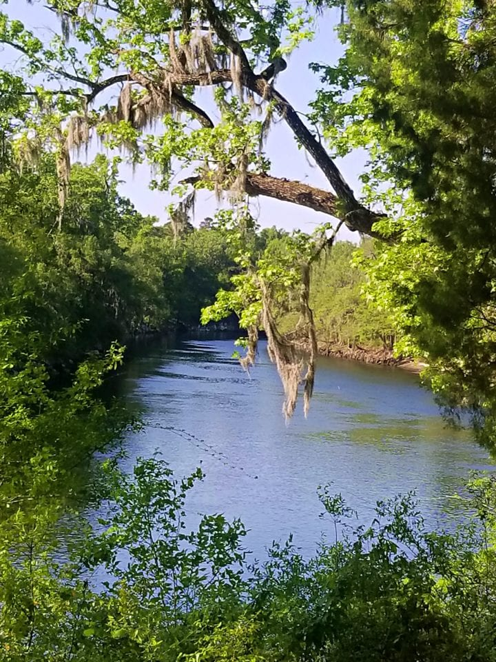 Suwannee River From State Park