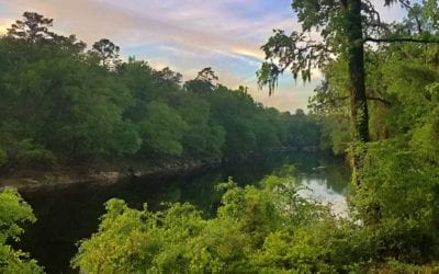Suwannee River State Park: The Practical Guide