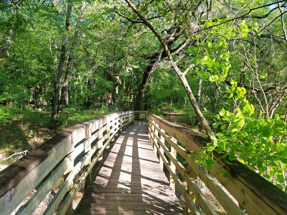 Suwannee River State Park hike