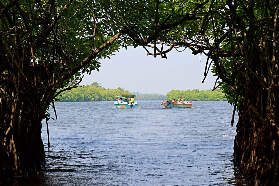 Through the mangrove tunnel on river cruise in Sri Lanka