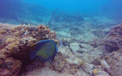 Scuba Diving in Fort Lauderdale with Pompano Dive Center