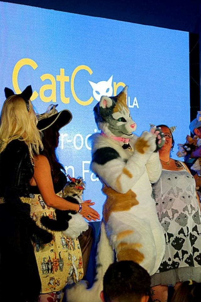 Love cats? Meet other people that are as obsessed with cats as you are at CatCon! #Cat #CatCon