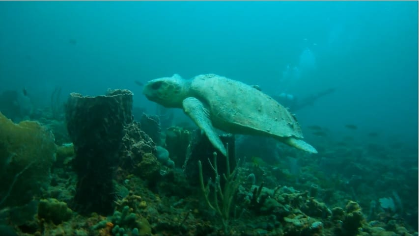 Turtle at Abbey Too Reef (still from Pompano Dive Center Video)