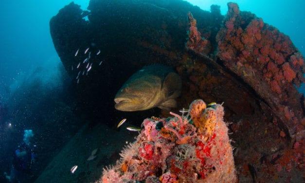 Fort Lauderdale Scuba Diving- A Dang Good Guide
