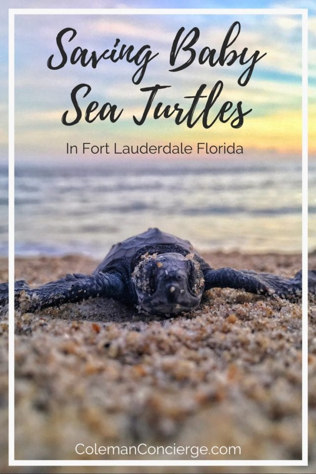 Want to take part in an eco-adventure for a good cause? With STOP in Fort Lauderdale, Fl. you can learn about sea turtles, and maybe see the miracle of baby sea turtles being born or a mother laying her eggs. Best of all you can learn how you can help save and protect sea turtles. #SeaTurtles #Conservation #Fort Lauderdale #Ethical #ResponsibleTourism #SustainableTourism #Florida