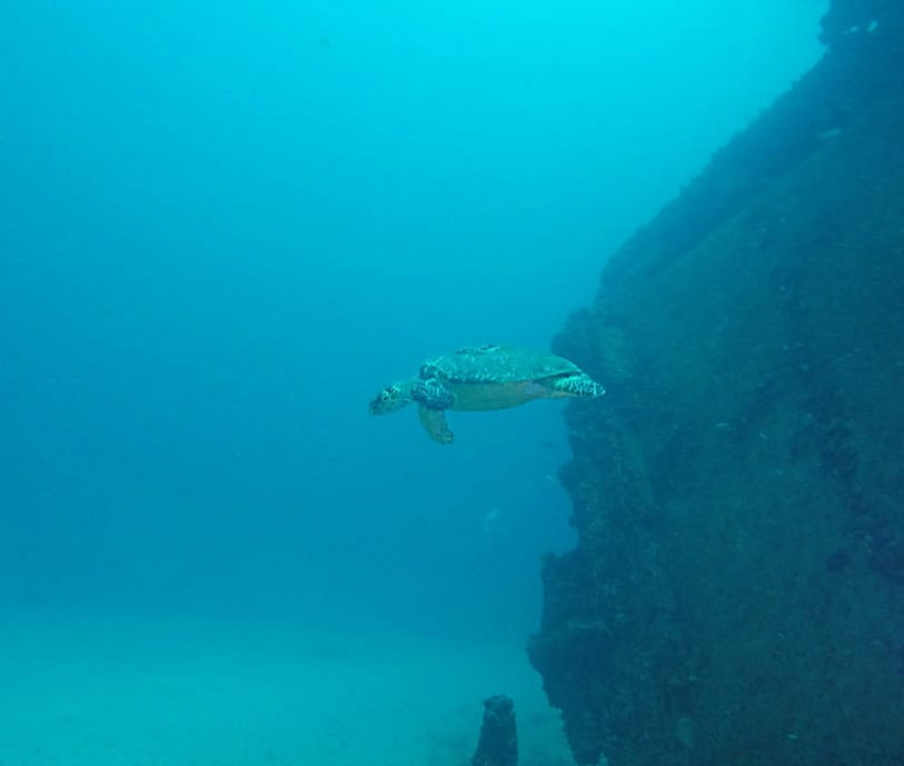 Turtle at Ancient Mariner dive site