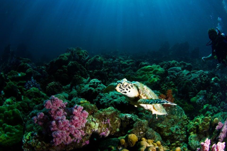 Sea turtle swimming (photo by Milos Prelevic)