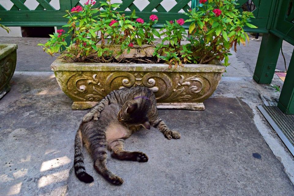 Hemingway House- Cat grooming