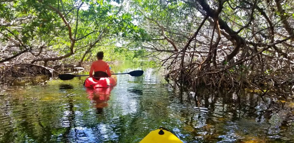 Kayaking through the mangroves Key West - dare I say tunnel of love?
