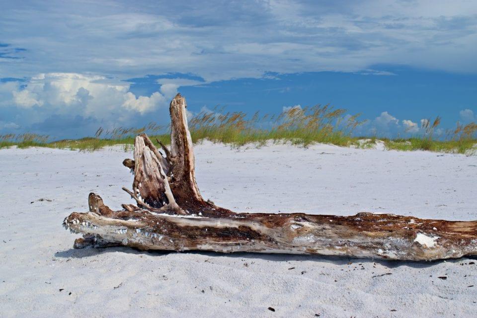 *Shell Island driftwood 4