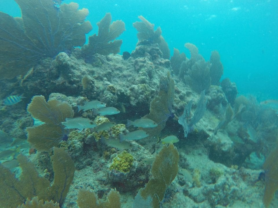 A beautiful scene from a coral reef at Key West