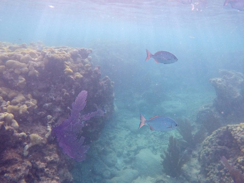 Snorkeling Key West Ethically- Our Guide To The