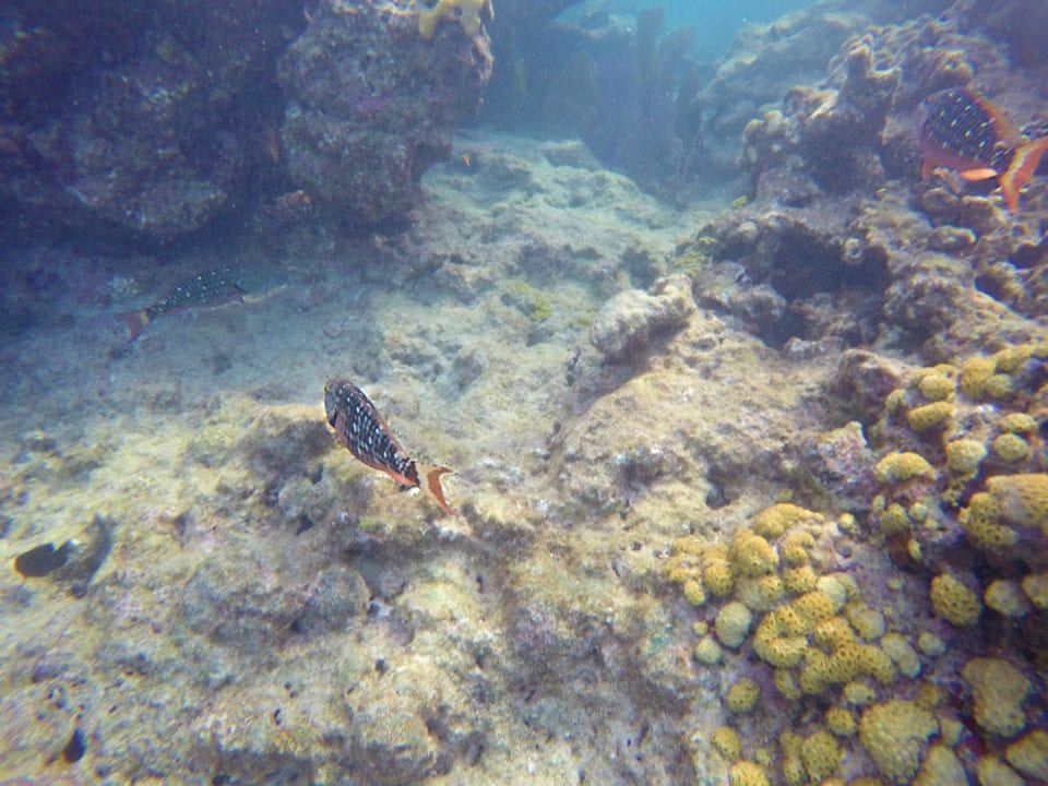 Snorkeling to see fish and coral