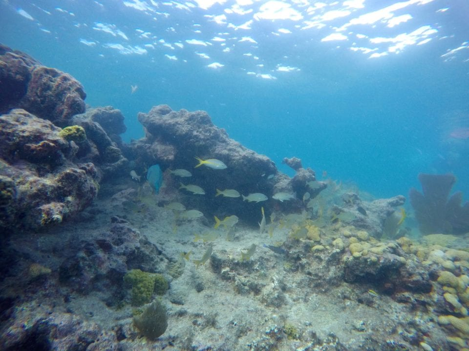 A beautiful scene from snorkeling on a coral reef in Key West