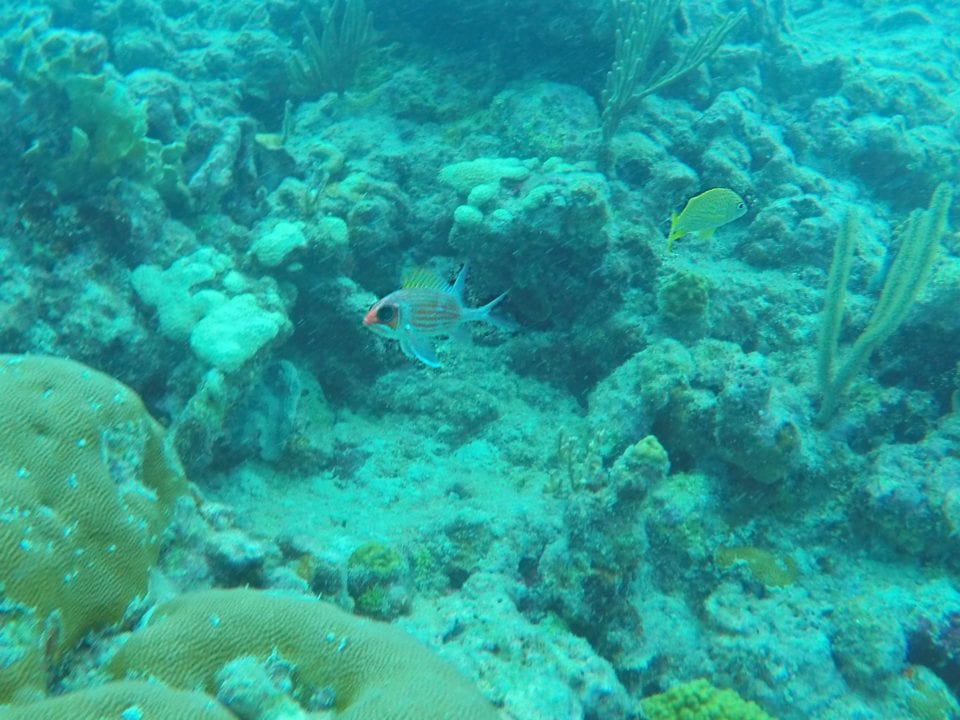 One of the many creatures we met snorkeling Key West
