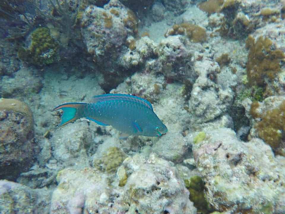 You see the most colorful fish snorkeling on coral reefs