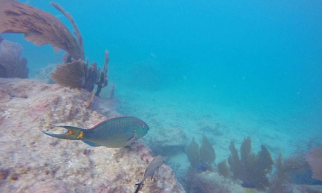 Snorkeling Key West Ethically- Our Guide to the Southernmost Point's Underwater World