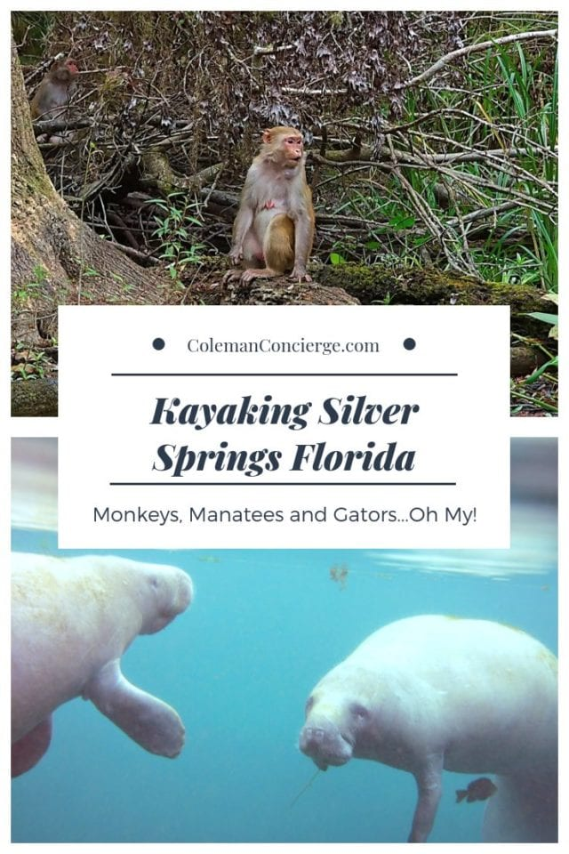Monkey and Manatee at Silver Springs State Park