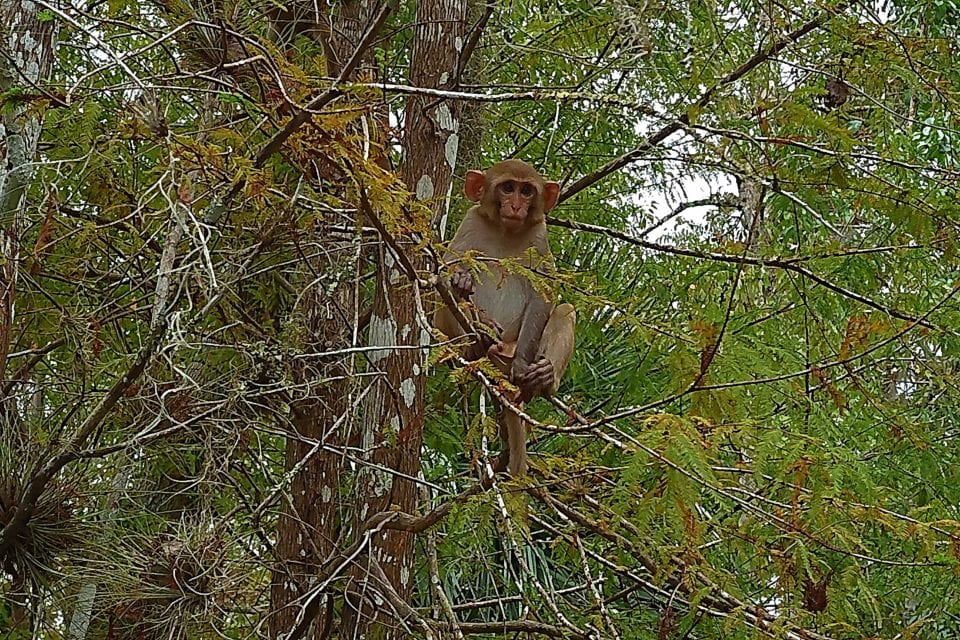 monkey in a tree on Florida's Rainbow River